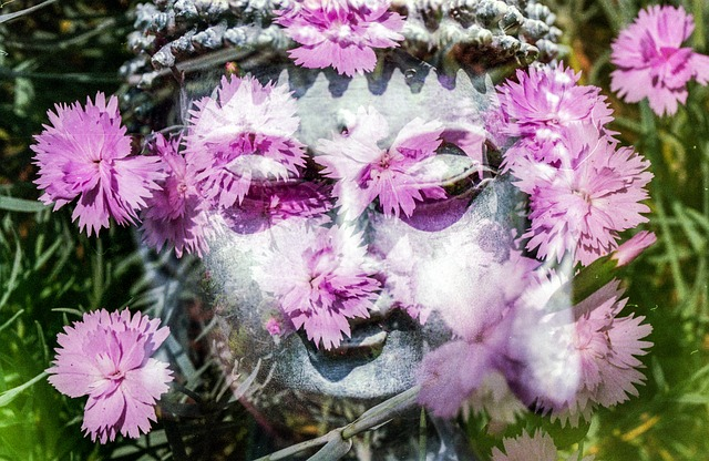 buddha-1280434_640